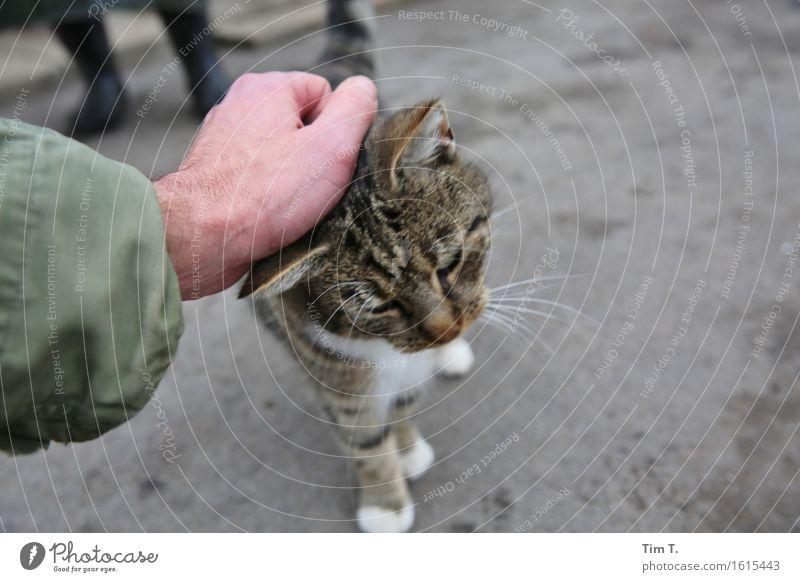 Cat Human being Hand Animal Love Masculine Relationship Pet Farm animal Caress
