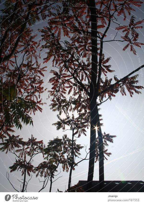 Lichtblick Nature Tree Sun Blue Plant Red Leaf Spring Branch Blossoming