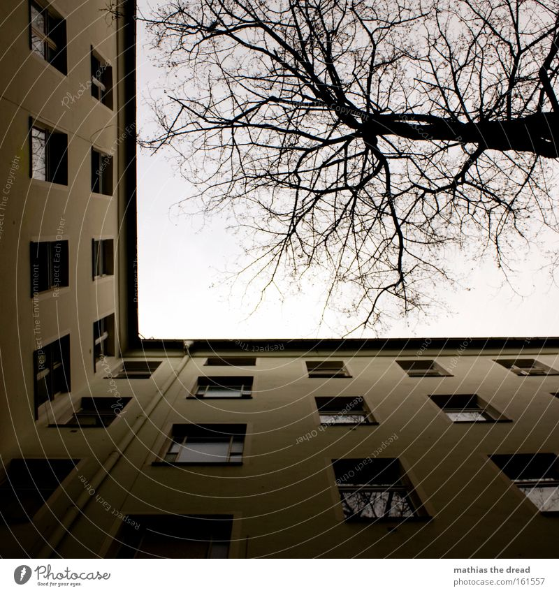 Sky Blue House (Residential Structure) Autumn Window Wood Building Line Flat (apartment) Tall Grief Branch Distress Window pane Treetop Old building