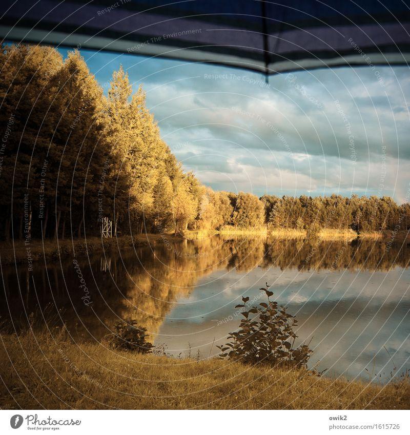 Sky Nature Plant Tree Landscape Calm Clouds Forest Environment Autumn Grass Lake Bright Horizon Illuminate Idyll
