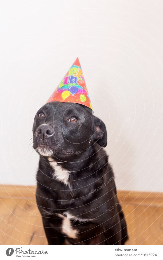 Dog White Animal Joy Black Funny Feasts & Celebrations Party Wild Leisure and hobbies Decoration Birthday Stand Wait Soft Pelt