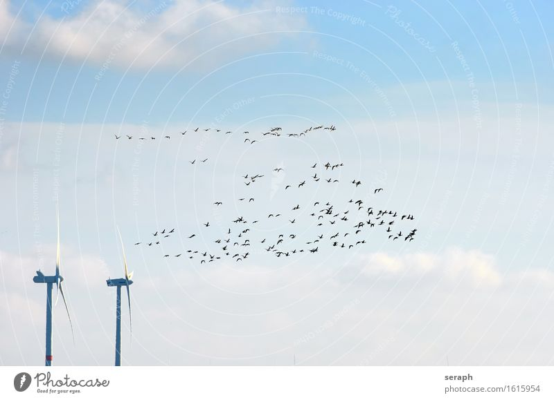 Migratory Birds Migratory bird Nature Flying Group Gray lag goose Goose Wind energy plant Environmental protection Ecological Nature reserve North Sea Sky
