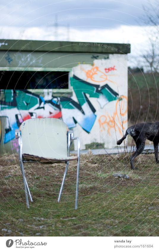 quadrupeds Dog Urine Graffiti Characters Chair Furniture Interior design Town Nature Dugout Derelict House (Residential Structure) Pet Mural painting