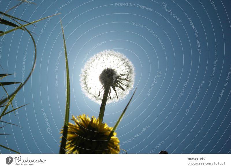 Nature Sky Sun Flower Blue Plant Yellow Blossom Spring Bright Back-light Dandelion