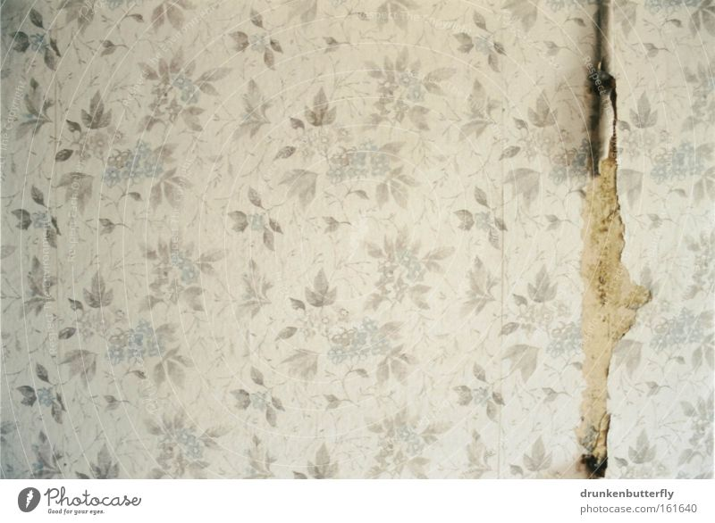 Old White Flower Blue Colour Wall (building) Gray Background picture Retro Wallpaper Derelict Decline GDR Pallid Crack & Rip & Tear