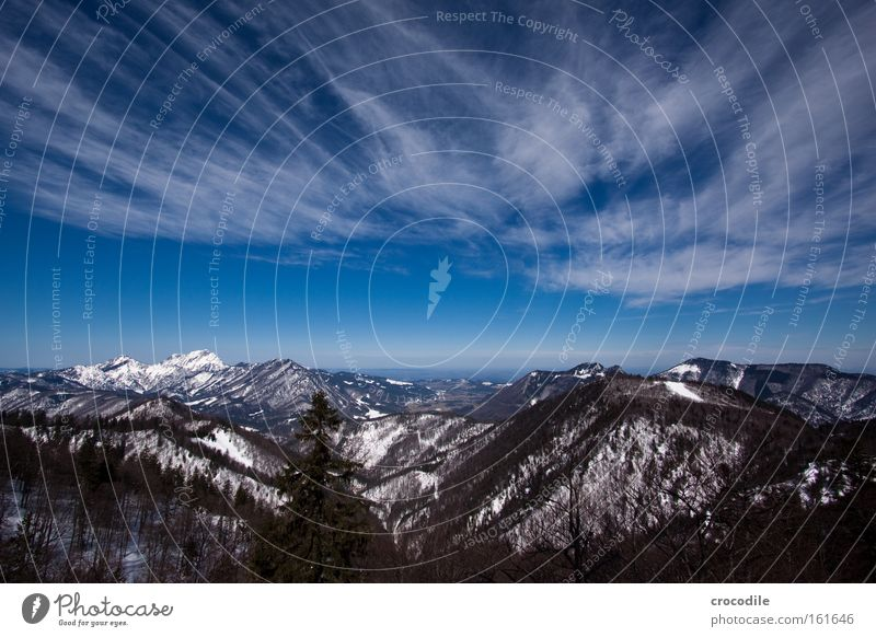 Sky Tree Winter Clouds Snow Mountain Large Alps Vantage point Austrian Alps Treetop Valley Clump of trees