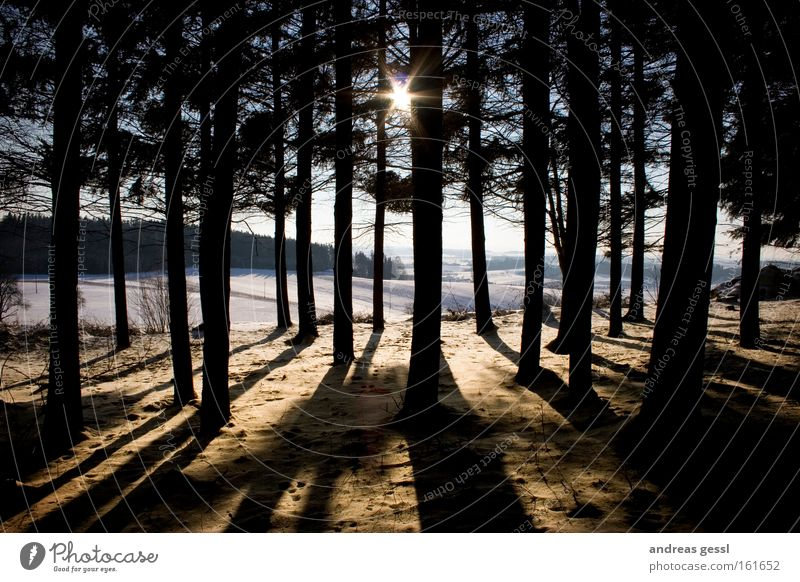 sun shadows tree Tree Sun Winter Snow Wood Landscape