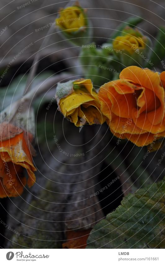 Flower Autumn Death Blossom Spring Orange Grief Transience Distress Goodbye Cry Memory Cemetery Souvenir Dried Funeral