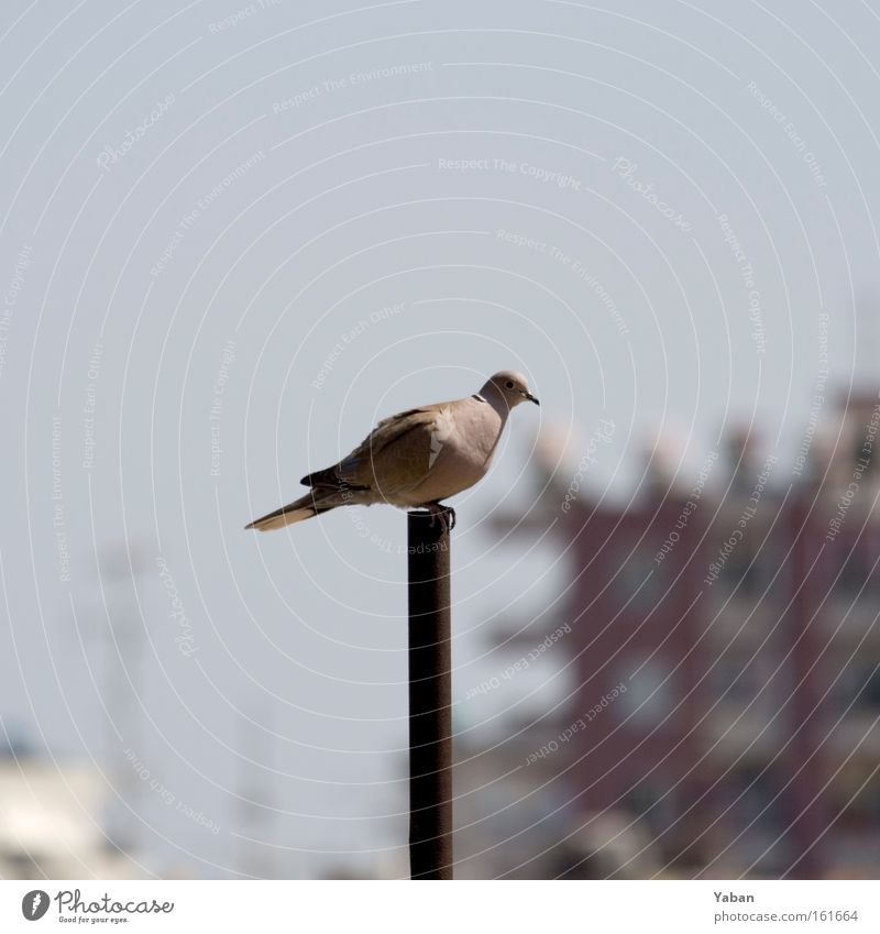 Loneliness Bird Aviation Middle Animal Pigeon Pole Turkey Flagpole Mediterranean sea Center point Review