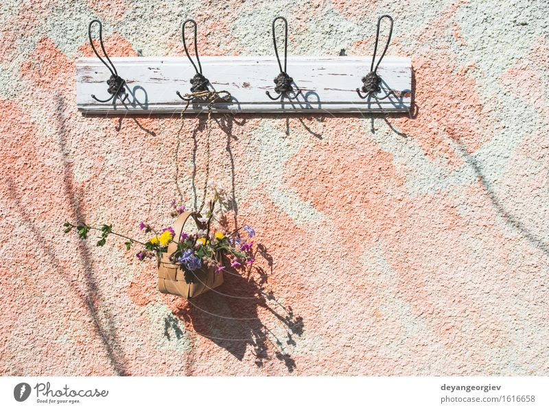 Flowers in the basket on hanger on a wall Pot Design Beautiful Summer Garden Decoration Nature Plant Leaf Blossom Green White Colour Hanging Basket spring