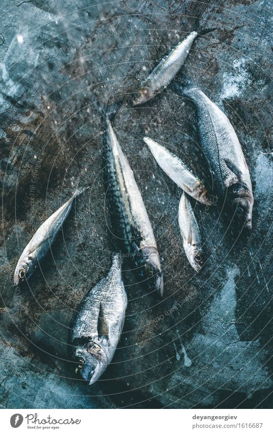 Wash fish. Sea bream, sea bass, mackerel and sardines Seafood Lunch Pan Cook Fresh Blue Black wash watter see bass Lemon Raw background healthy frying Fat