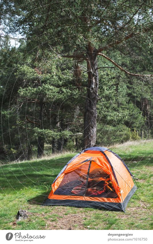 Orange tent in a pine forest Nature Vacation & Travel Green Summer Tree Relaxation Landscape Forest Mountain Natural Grass Tourism Park Leisure and hobbies