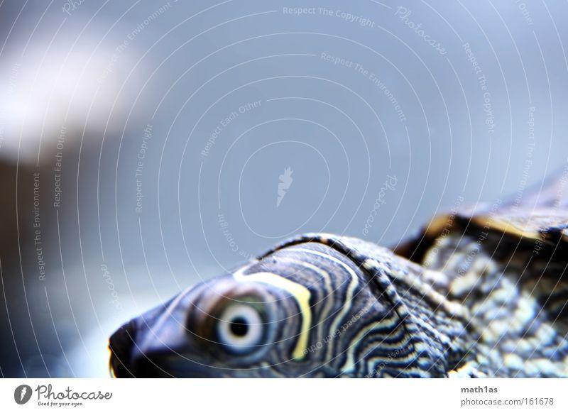 Turtle I Pattern Macro (Extreme close-up) Leather Skin Armor-plated streak Eyes