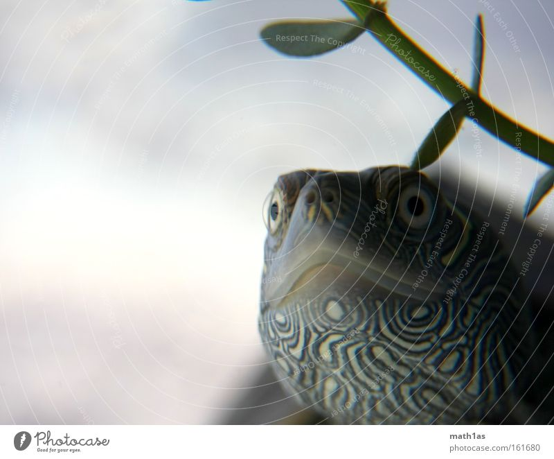 Water Plant Eyes Skin Leather Turtle Armor-plated Reptiles Underwater photo