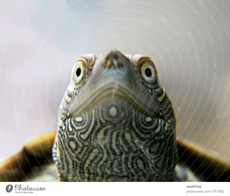 Turtle III Pattern Macro (Extreme close-up) Leather Skin Plant Water Underwater photo Armor-plated streak Eyes
