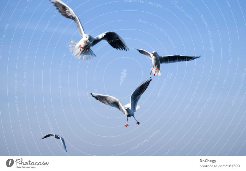 Set of sea gulls isolated on blue sky Nature Sky White Blue Life Movement Freedom Air Bird Flying Wing Seagull Migration Animal Maneuver