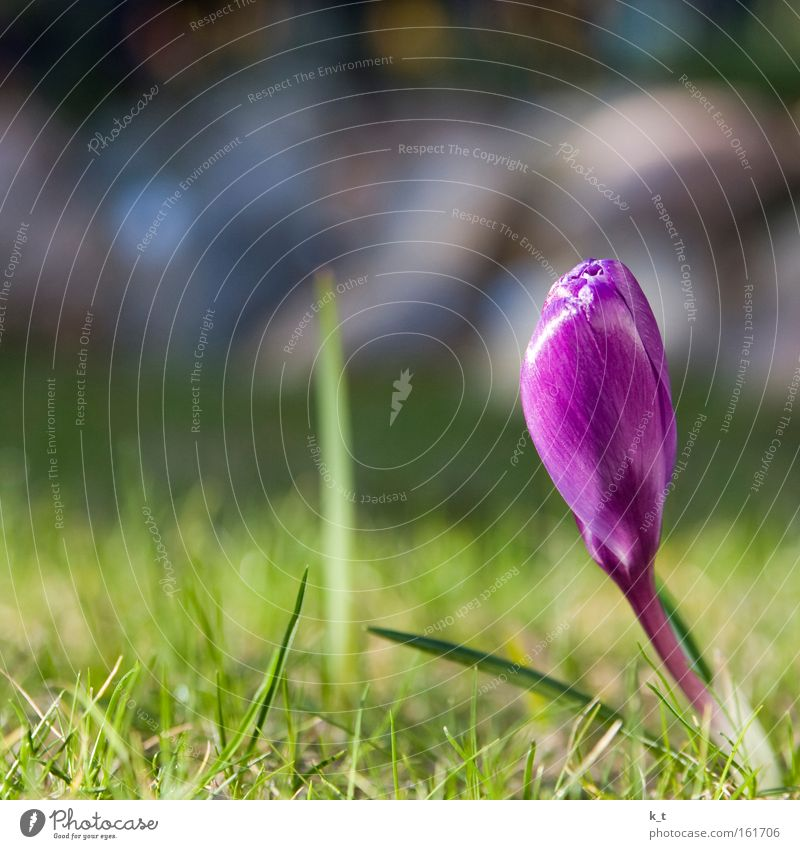 Nature Beautiful Flower Green Plant Colour Life Meadow Grass Spring Beginning Hope Growth Near Violet Kitsch