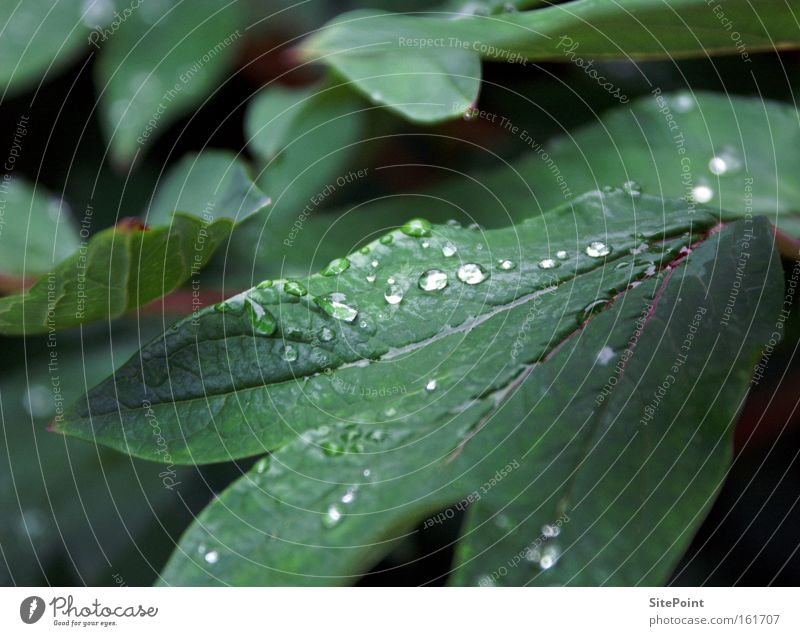 rope Spring Dew Morning Drops of water Green Leaf Plant Park