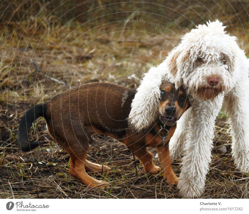 Dog White Animal Joy Black Funny Playing Brown Together Friendship Stand Joie de vivre (Vitality) Cute Cool (slang) Break Curiosity