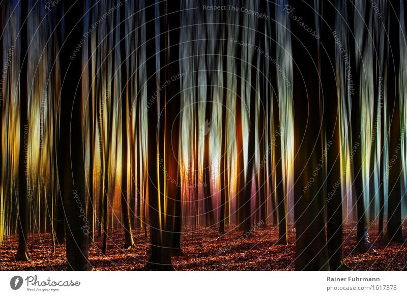 In the ghost forest with strange light Nature Landscape Forest Exceptional Wild Fear Dangerous Timidity Colour photo Exterior shot Sunbeam Back-light