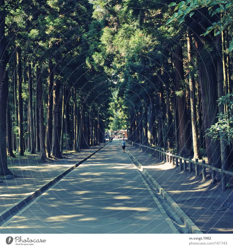 forest path Lanes & trails Forest Direct Shadow Light Coniferous trees Old Target Footpath Nature Tree Human being Park Summer Center point
