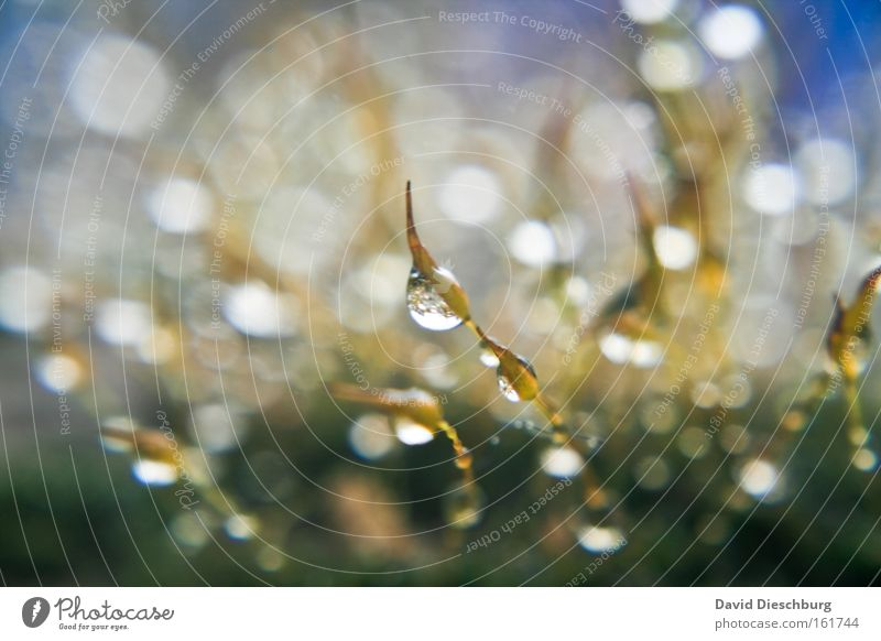 Nature Water Plant Autumn Grass Rain Wet Drops of water Damp Point of light Lens flare Hydrophobic Macro (Extreme close-up) Patch of light