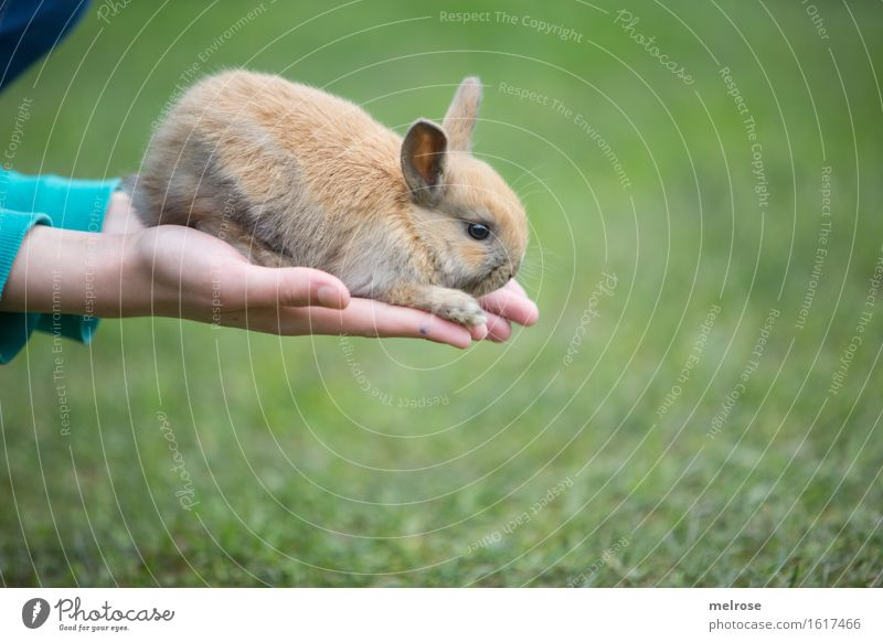 and jump ... Girl Hand Fingers 1 Human being 8 - 13 years Child Infancy Pet Animal face Pelt Paw hare spoon Pygmy rabbit Rodent Mammal Baby animal