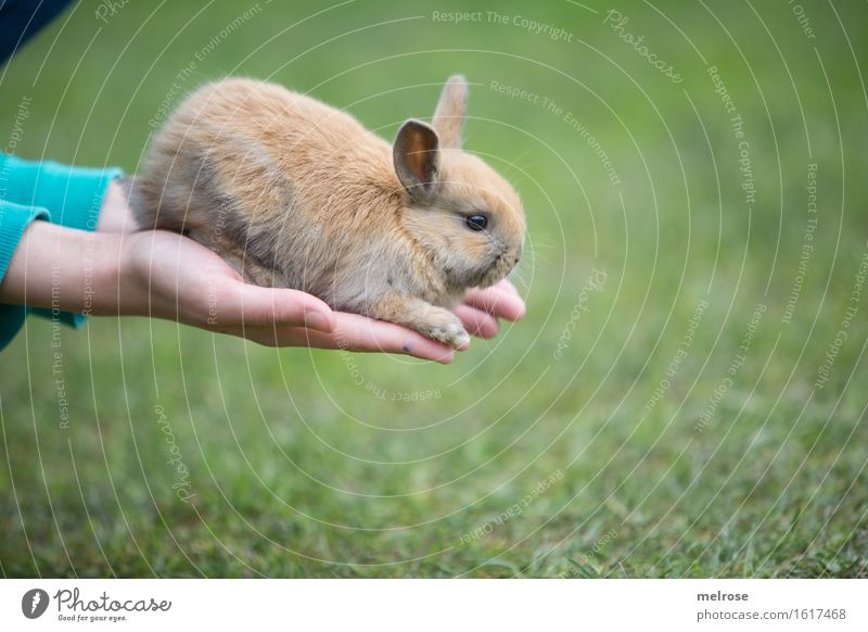 A N G S T Rabbit Girl Hand Fingers 1 Human being 8 - 13 years Child Infancy Pet Animal face Pelt Paw baby hare hare spoon Pygmy rabbit Rodent Mammal Baby animal