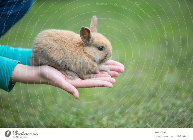 TuesdayHASE Girl Arm Hand Fingers 1 Human being 8 - 13 years Child Infancy Pet Animal face Pelt Paw baby hare Pygmy rabbit Mammal Rodent hare spoon Baby animal