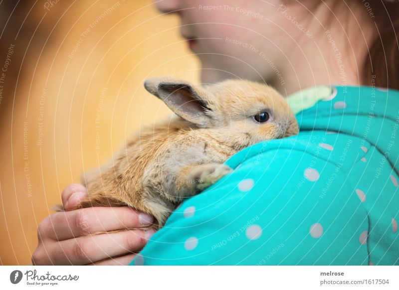 feel-good oasis Girl Face Nose Mouth Arm Hand Fingers Shoulder 1 Human being 8 - 13 years Child Infancy Pet Animal face Pelt Paw hare spoon Pygmy rabbit Rodent