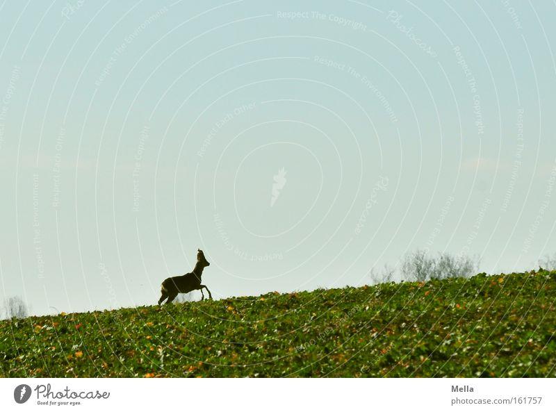 Spring Field Walking Wild animal Upward Escape Mammal Roe deer Flee
