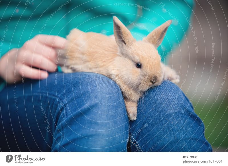 completely relaxed Girl Hand Fingers Legs Knee 1 Human being 8 - 13 years Child Infancy Pet Animal face Pelt Paw baby hare Pygmy rabbit hare spoon Rodent Mammal