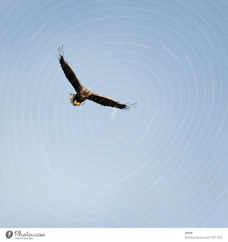Sky Nature Blue Animal Environment Freedom Air Bird Flying Power Wild animal Climate Beautiful weather Feather Wing