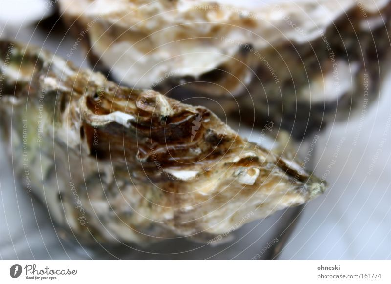 Ocean Nutrition Success Fish Gastronomy Restaurant Mussel Food Champagne Seafood Sea water Decadence Salty Oyster Jet set