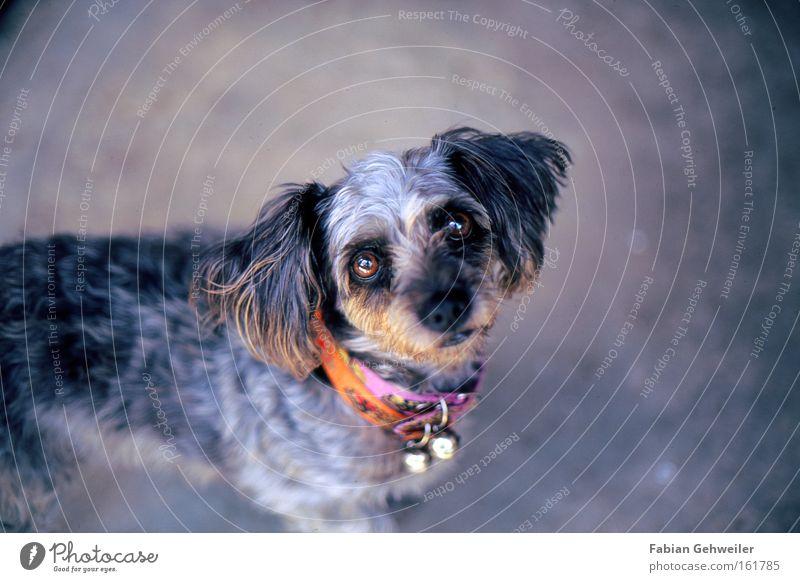 Beautiful Dog Ear Asia Friendliness Appetite Mammal Expectation Thailand Vignetting Neckband Dog collar