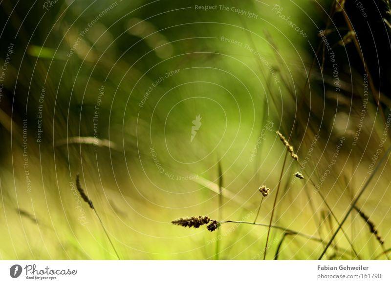Allusion to a illusion Illusion Grass Nature Blur Summer Mild Pleasant Wind