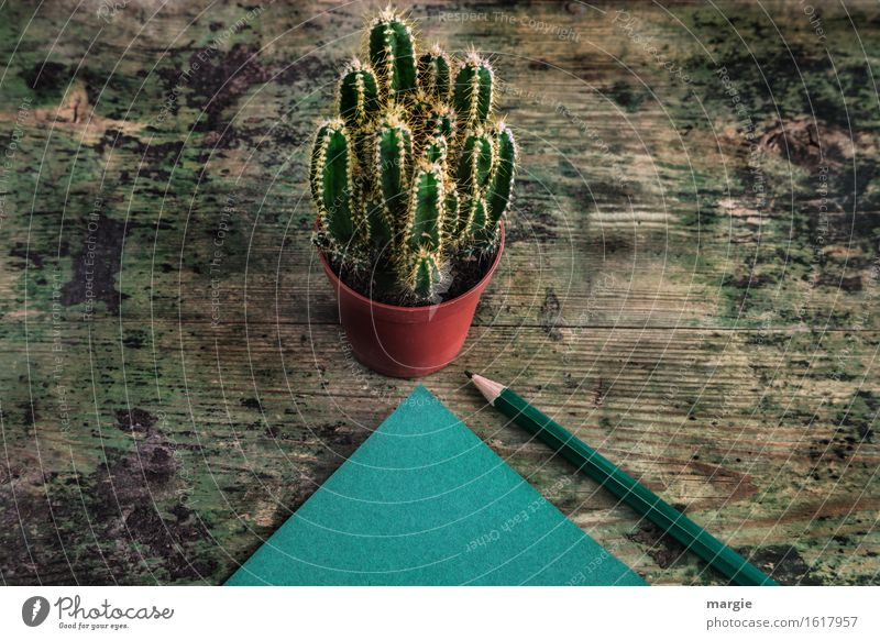 Clever message: a cactus in a flowerpot and a green notepad with a pencil on an old wooden table Study Profession Office work Workplace Advertising Industry