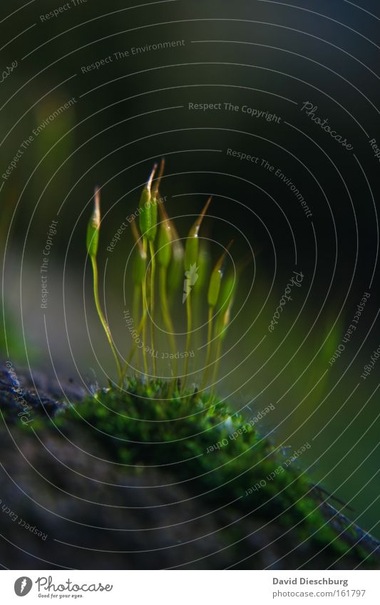 Nature Green Plant Grass Spring Growth Ground Moss Leaf green Plantlet Macro (Extreme close-up) Grass green Natural growth Ground cover plant Light green