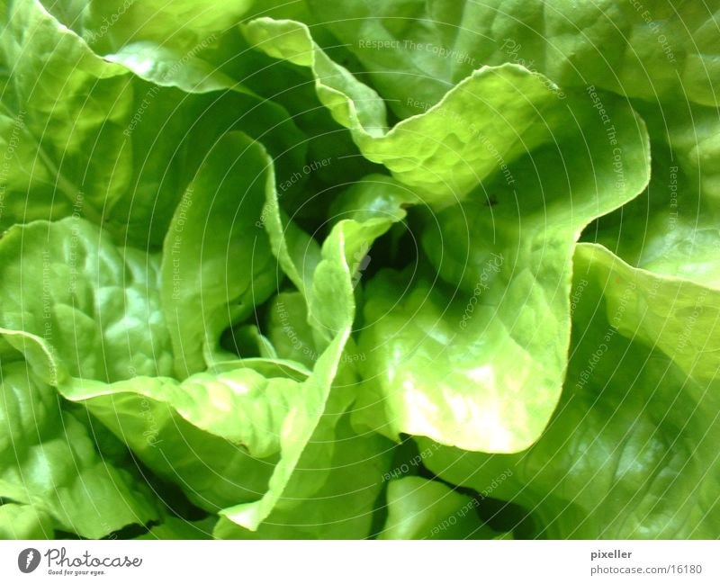 salad food Green Plant Healthy Lettuce Vegetarian diet Nutrition