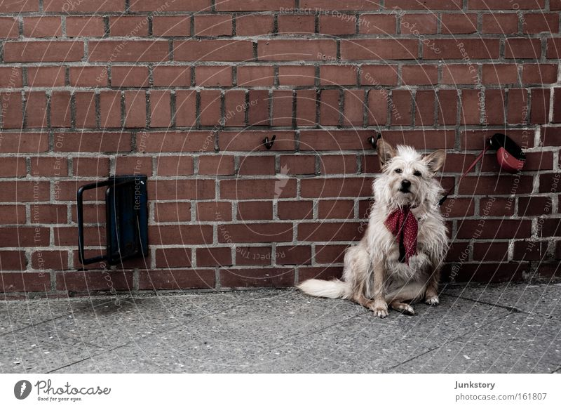 brick dog Brick Wall (barrier) Dog Rope Wait Exposed Pet Loneliness Wall (building) Captured Mammal Street dog
