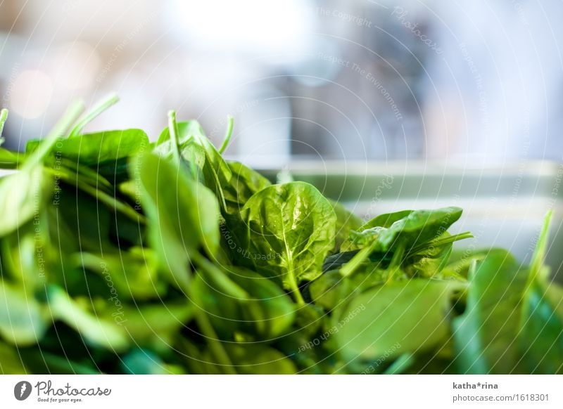 leaf.spinach Food Vegetable Lettuce Salad Spinach Spinach leaf Fresh Healthy Green Colour photo Interior shot Close-up Detail Deserted Copy Space top