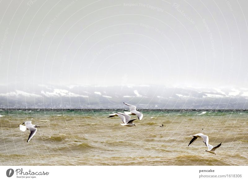 Nature Water Landscape Winter Life Snow Flying Moody Bird Waves Power Group of animals Elements Lakeside Alps Passion
