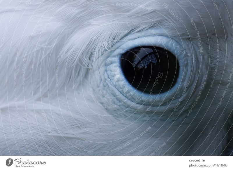 captivity Eyes Bird Captured Grating Cage Feather Black Reflection Blue White Beautiful Sadness Looking Parrots Grief Distress Macro (Extreme close-up) Close-up