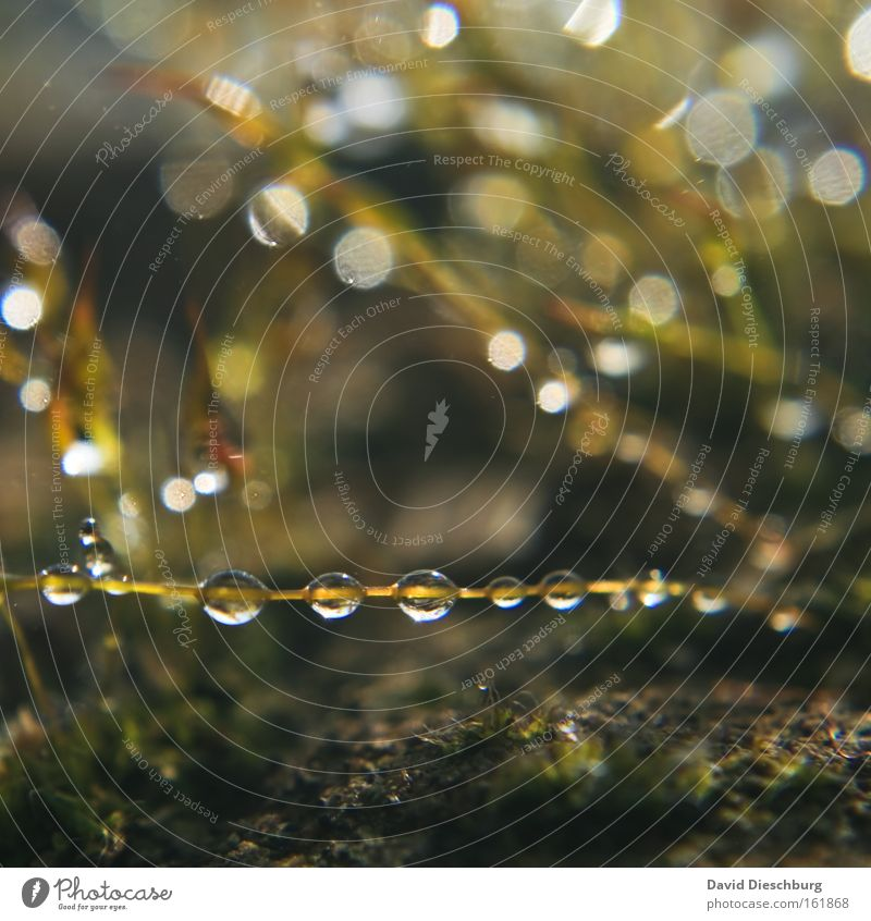 Nature Plant Water Rain Drops of water Many Stalk Sphere Blade of grass Row Silver Damp Beaded Hydrophobic