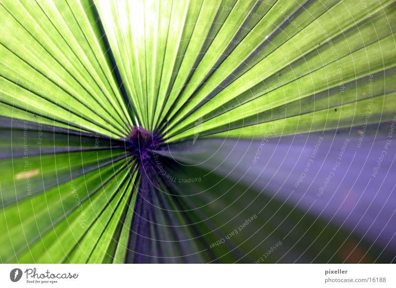 Sun Green Plant Summer Vacation & Travel Leaf Violet Palm tree