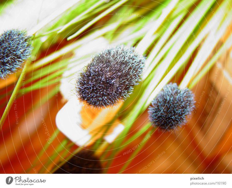 Flower Green Grass Decoration Living or residing