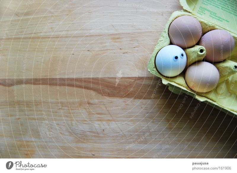 Egg Egg Egg Colour photo Interior shot Close-up Detail Deserted Copy Space left Copy Space top Copy Space bottom Copy Space middle Day Shadow Bird's-eye view
