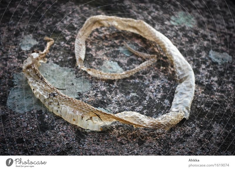 Nature Rock Growth Mysterious Hide Symbols and metaphors Wrinkle Personal hygiene Remainder Advancement Formation Distorted Molt Formula Alphabetical Snake skin