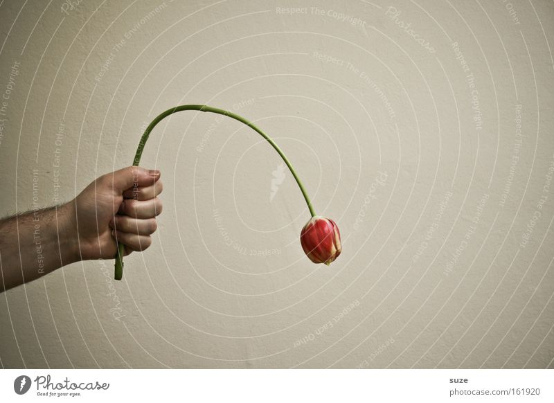 Hand Flower Emotions Desire Grief Evil Tulip Thank you very much Sin Apology Why Ask Reveal