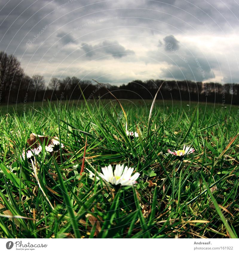 Clouds Meadow Grass Spring Park Weather Lawn Worm's-eye view Daisy April Fisheye Spring flowering plant